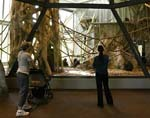 Lincoln Park Zoo's Regenstein Center for African Apes